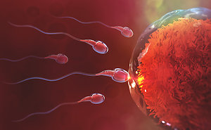 Reproflexology™ Fertility Reflexology. sperm and egg